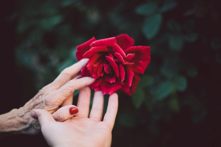Old hand with rose